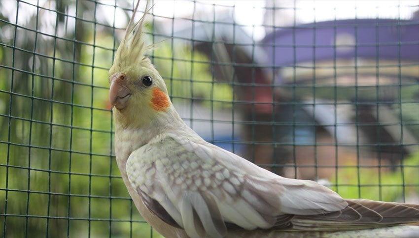 Burung-di-Pasar-Pasty