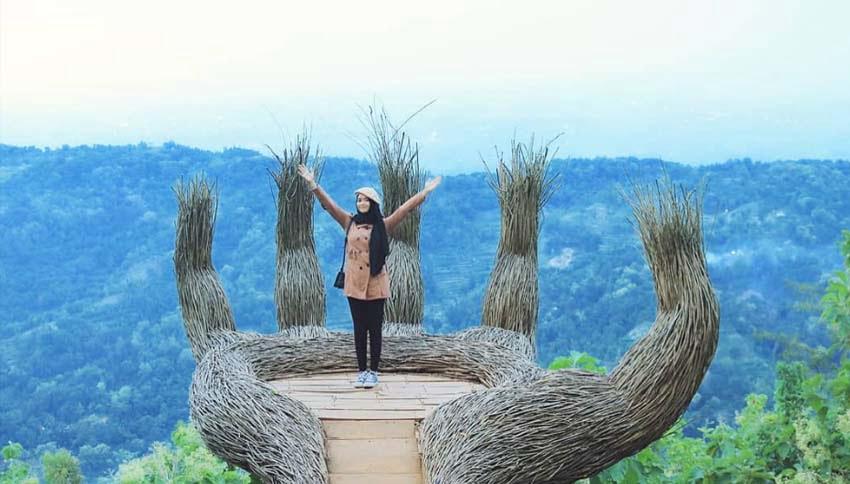 wisata jogja pinus pengger Hutan Pinus Pengger Lokasi Rute Foto Harga Tiket Masuk