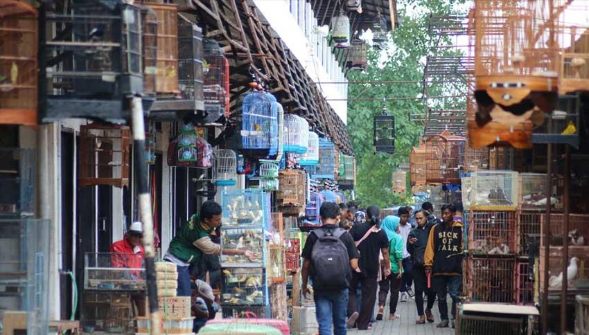 Suasana Pasty Pasar Satwa