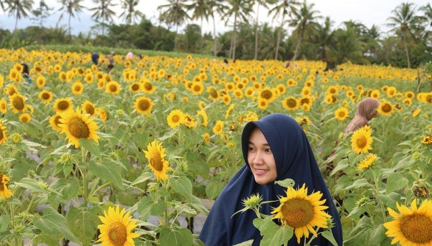 Lokasi Taman Bunga Matahari Dewari