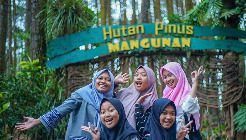 Spot Foto Hutan Pinus