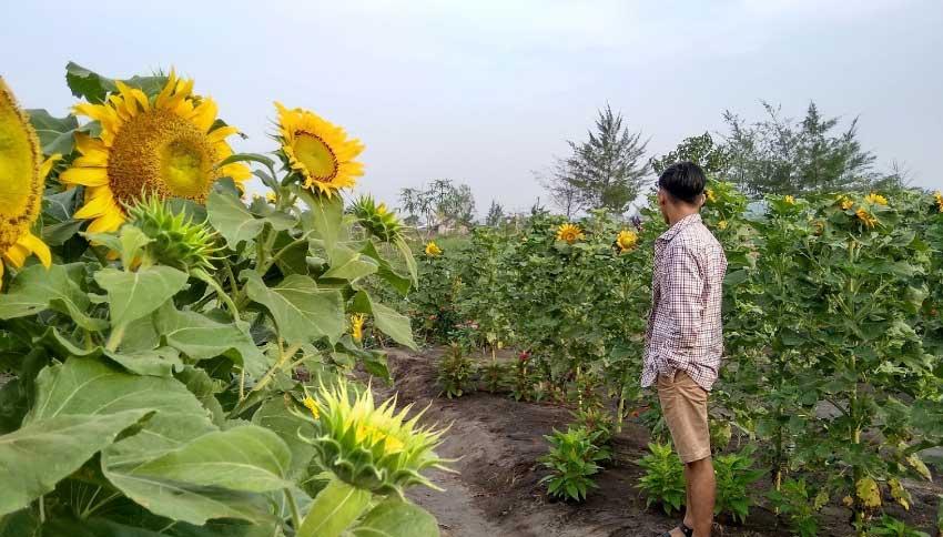 Taman Bunga Matahari Samas