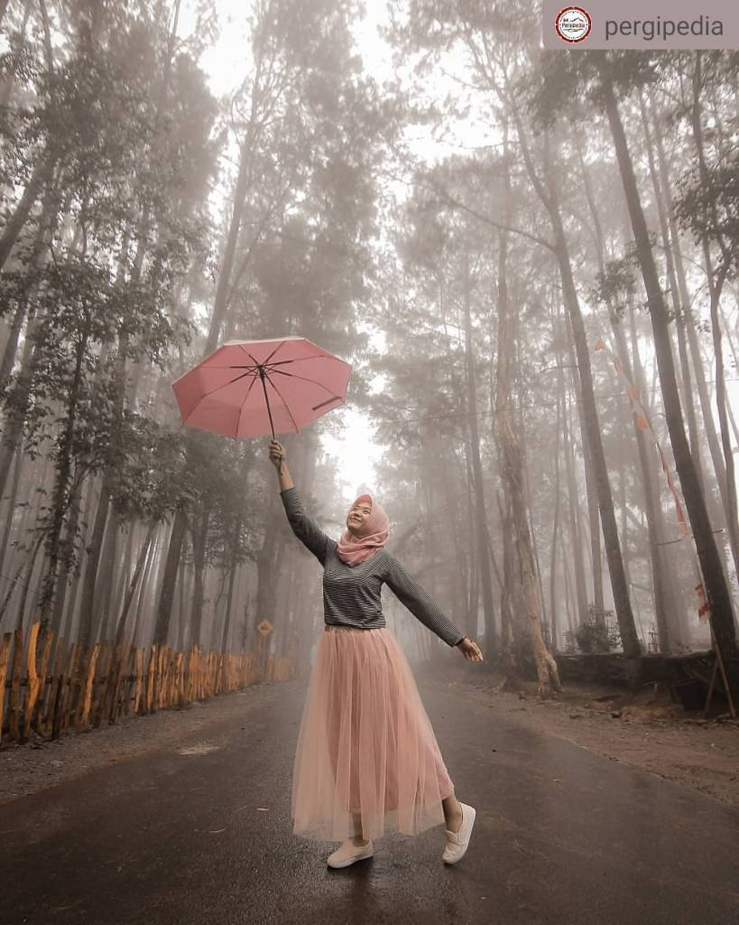 Hutan Pinus Mangunan, Bantul, Yogyakarta @putrianindyah
